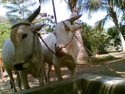 These are my Grandfathers Farm-Machine's! Driving Bullock-Cart is Fun………..