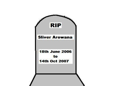 eGrave of my SILVER AROWANA, 18th June 2006 - 14th Oct 2007