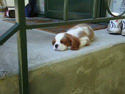 Napping on the Front porch