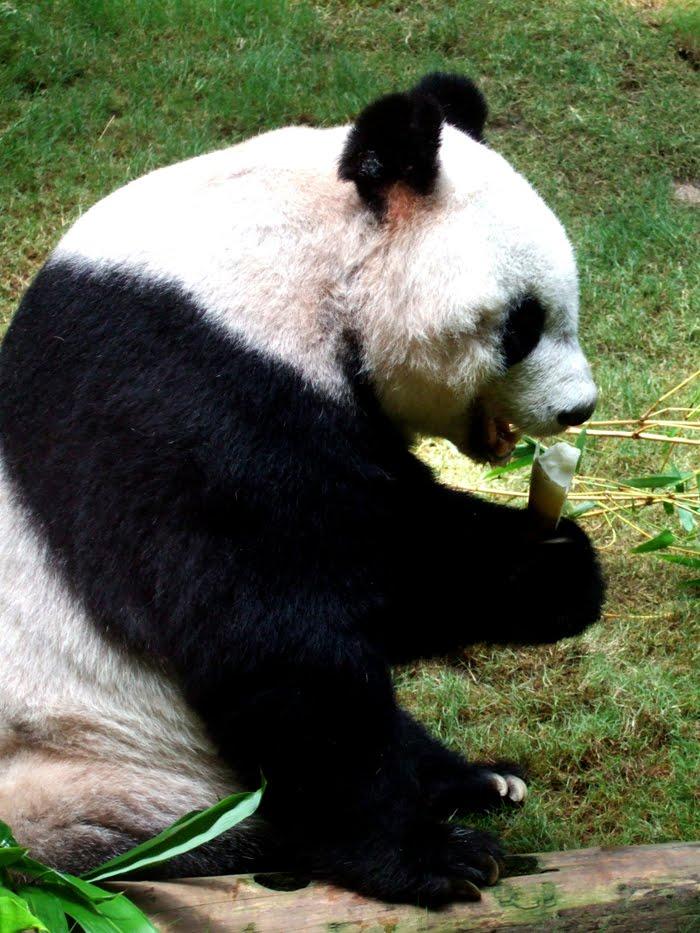 Wilton 3d Panda Cake Ideas And Designs