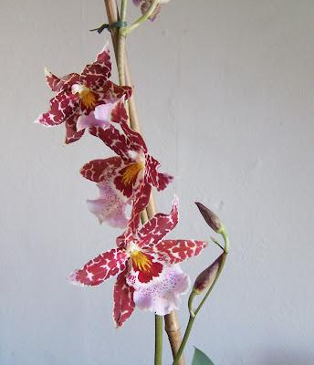 zimmergarten orchideenbl te. Black Bedroom Furniture Sets. Home Design Ideas