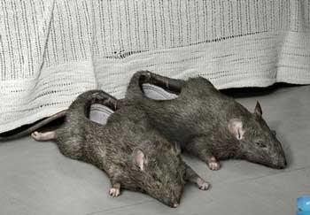 weird slippers strange funny 01 - Meri taraf sey aapkey liyye
