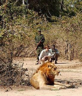 Lion at Kakuli