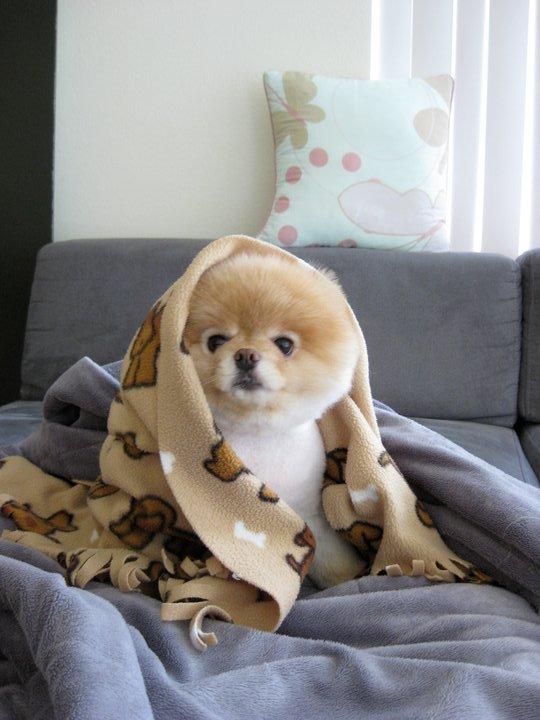 The Cutest Dog On Earth Crystalphuong Singapore Fashion