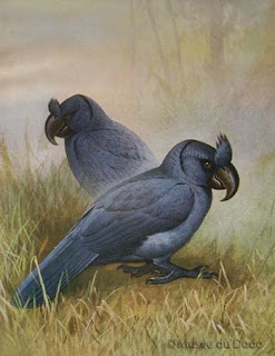 papagayo de Mauricio Lophopsittacus mauritianus extinct birds in the islands