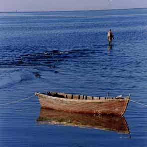 """القارب """"م"""""""