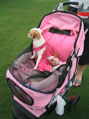 Yes, that's right:  She dresses her dogs in pink and pushes them around in a baby stroller…