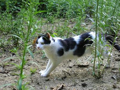 Pour les amoureux des chats IMGP5181