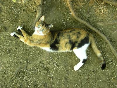 Pour les amoureux des chats Etirement