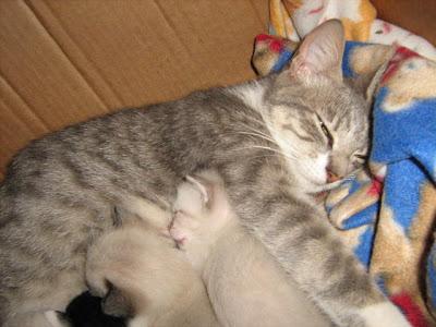 Movimento Gatos da Redenção: Setembro 2007