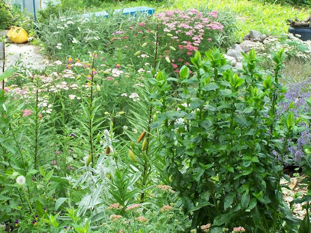 Wild Perennial Garden