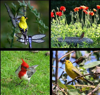 Fifi Flowers Outdoor Wednesday For The Birds