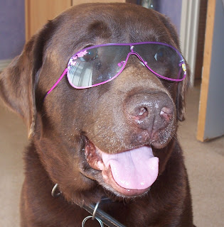Sweet N Lo' - 40 Dog