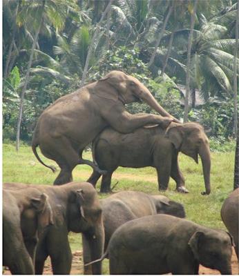 Секс с слон и чнловек