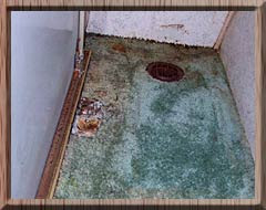 Pest Of The Week Mold Is It Growing In Your Home S