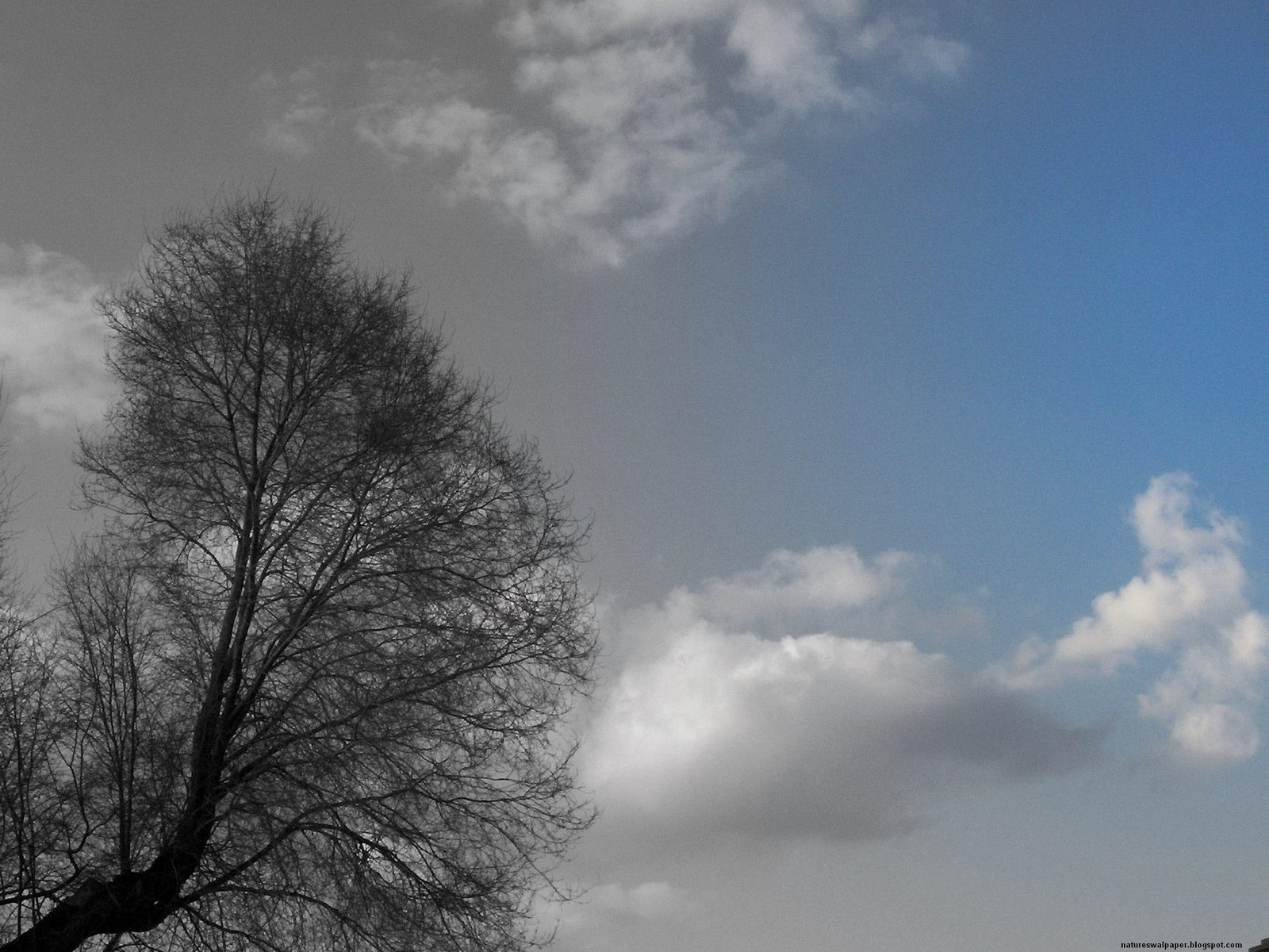 [Black+And+White+Tree+With+Blue+Sky.jpg]