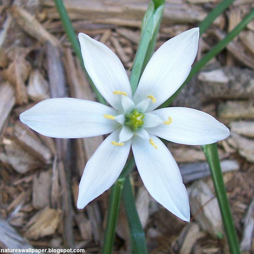 [Strange+White+Flower.jpg]