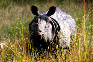 Rhino (one horne animal) only Nepal and India