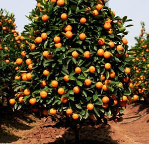 Caroline Bookbinder Book Review Oranges By John Mcphee