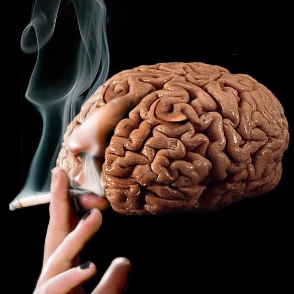Resultat d'imatges de cerebro nicotina