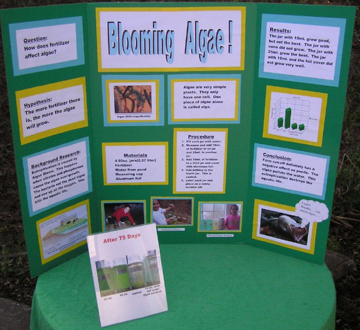 New Beauty News Ideas For Science Fair Projects For 7th Grade