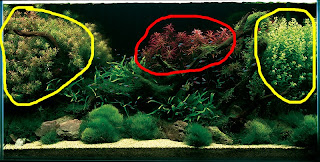 Next, The Focal Point Of This Aquascape Is Clearly The Red Plant In The  Middle (I Canu0027t Quite Tell What Type Of Plant It Is Exactly).