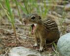 Princess Pignatelli Fashion: Rabid Chipmunks, Rabid ...