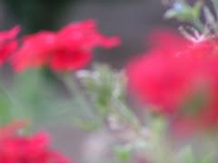 Ein Blumengruß