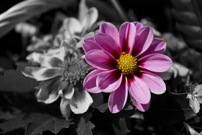 Exemple de colorisation sur une photo en noir et blanc de James Dean prise par Dennis Stock (via richzhang.github.io) Exemple de colorisation sur des photos en noir et blanc d'Henri Cartier-Bresson (via richzhang.github.io)