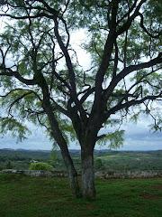 Da árvore: Frutos de resistência.