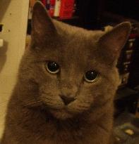 Reggie Cat