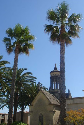Palmeres mexicanes (Washingtonia robusta) Gandia