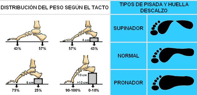 6c8b7c979 El Calzado Deportivo y la Biomecánica del Pie