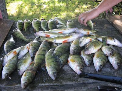 Houghton lake walleye report big manistique lake curtis for Enid lake fishing report