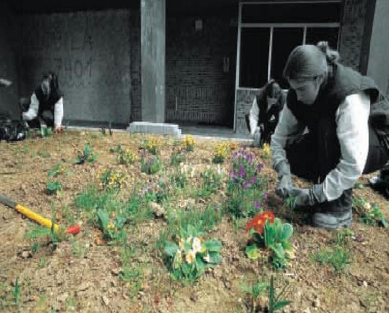 Todo plantas y jardineria manual de jardineria for Jardineria y plantas