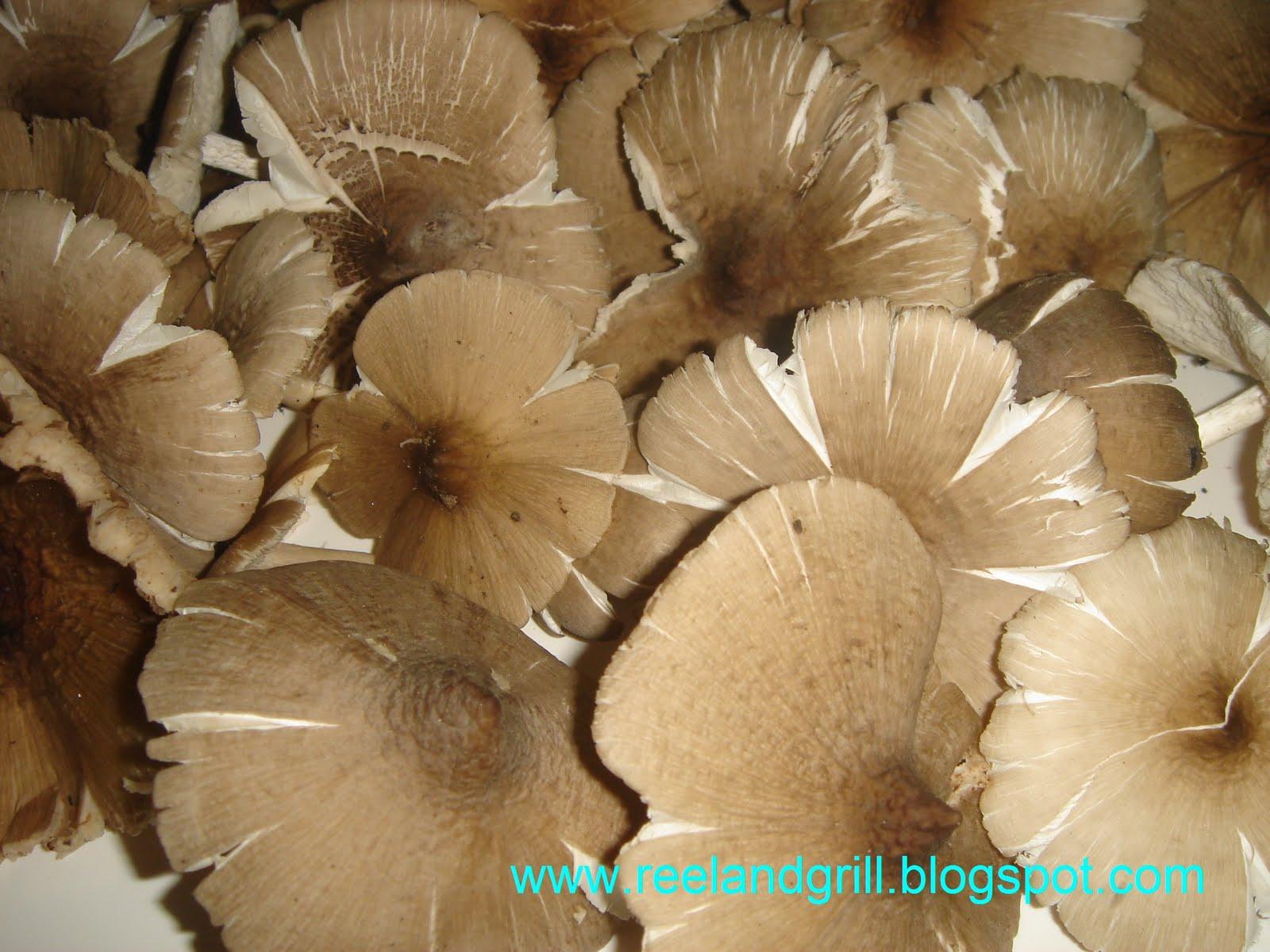 Mushroom Soup Reel And Grill Kabuteng Mamarang Tasty Wild Mushroom Soup
