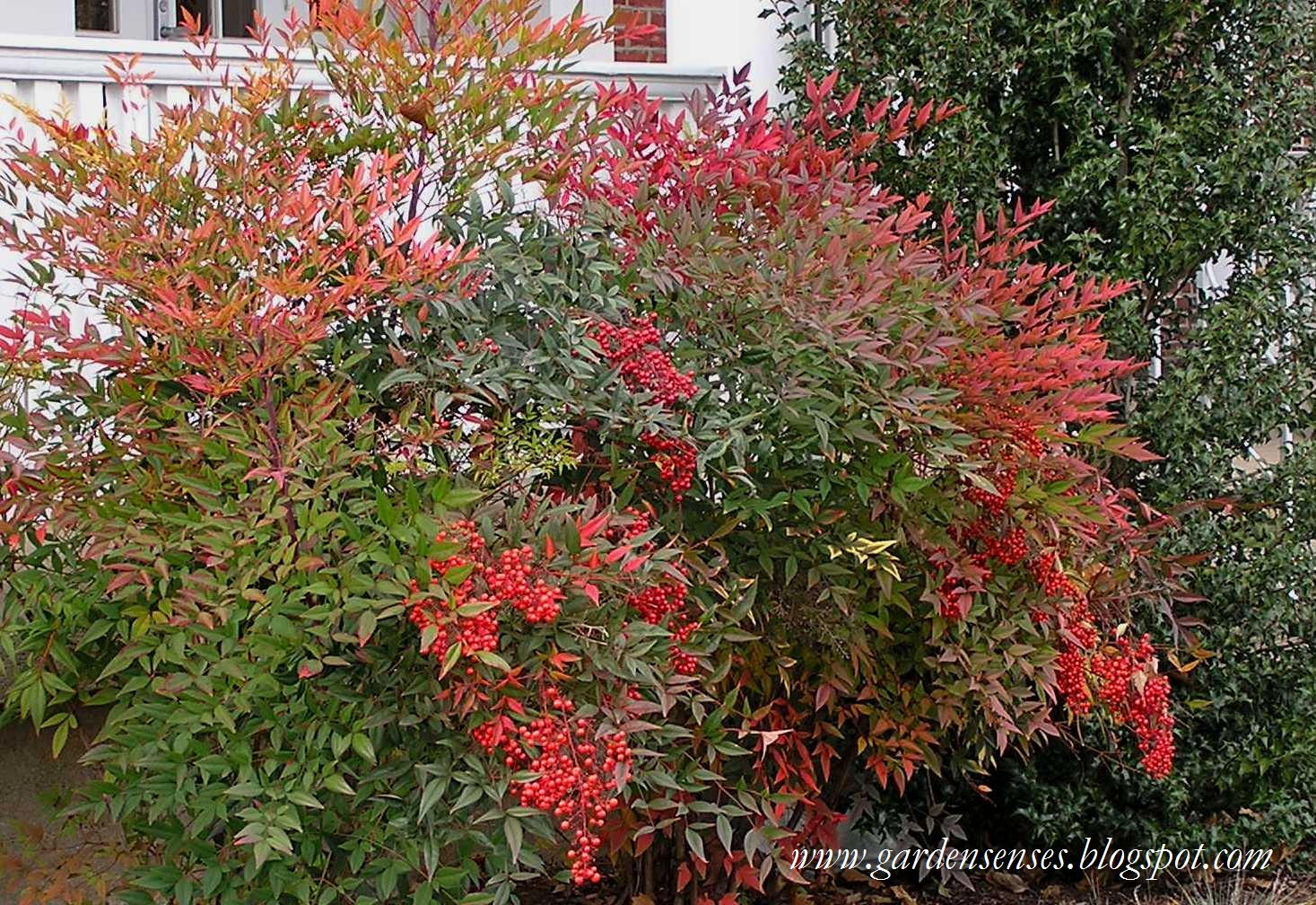 color tree bush - photo #47