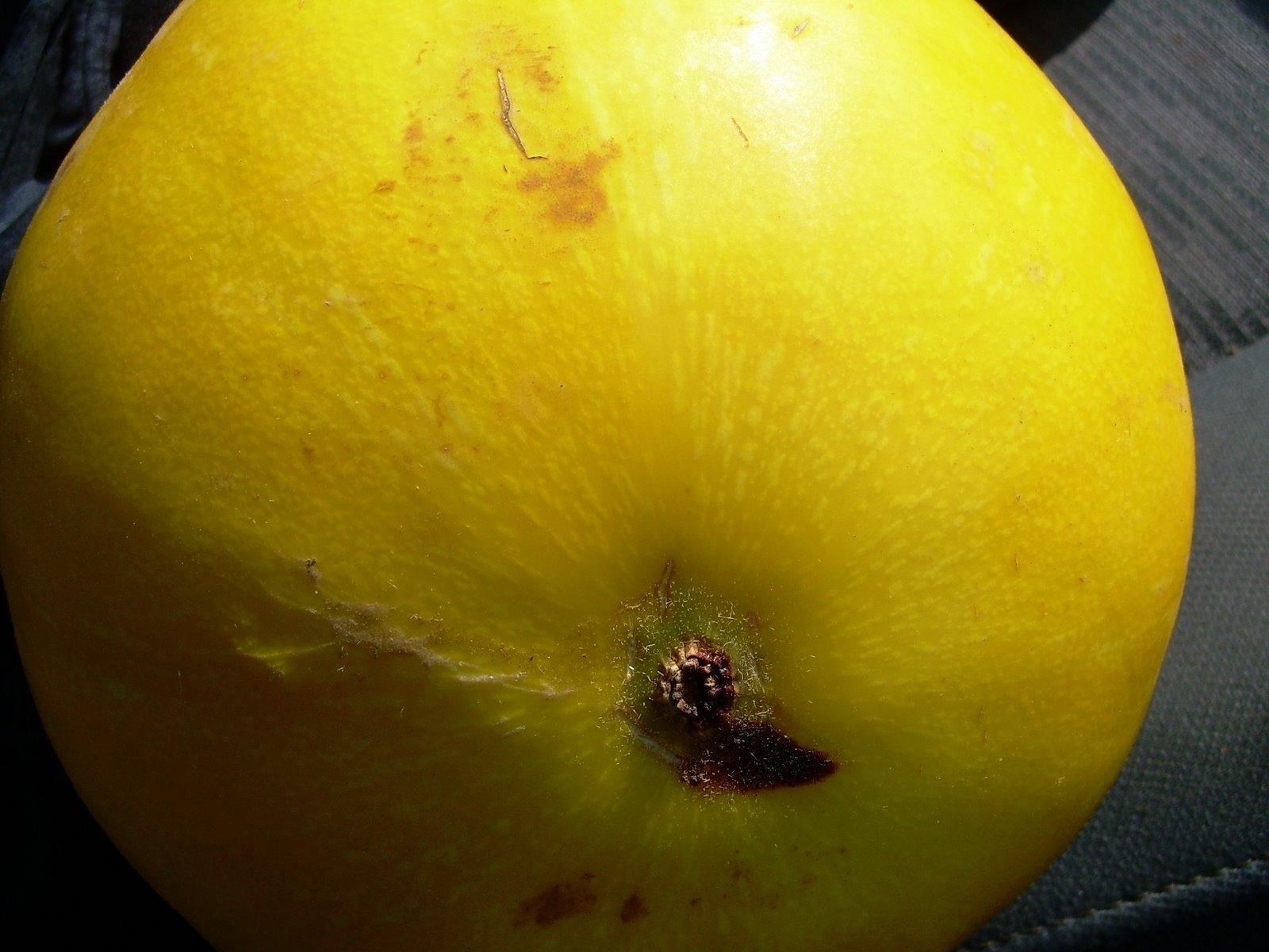 [melons+011.jpg]