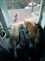 cats watch birds