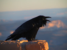 The Crow Talks