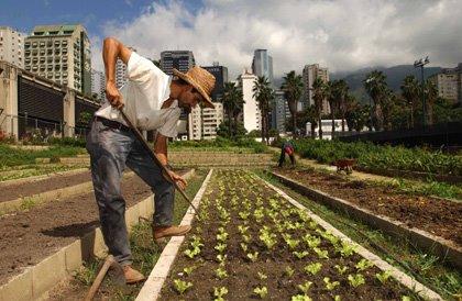 Campesino Venezolano