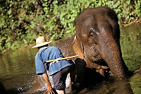 泰國,泰國航空,泰國旅遊,泰國曼谷,泰國簽證,泰國旅行社,泰國導遊,泰國航空公司,泰國潑水節,泰國觀光局24