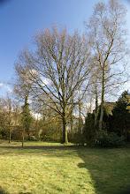April oak