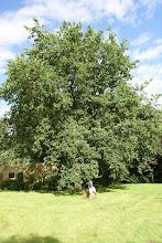 July oak