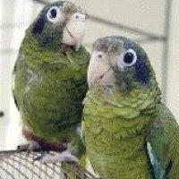 Piden regular o detener caza de aves en el municipio de Mella