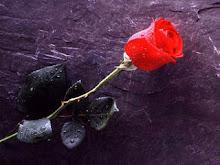 uma rosa para quem nos visita...