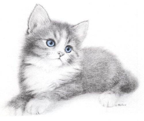 Gatos Em Preto E Branco Para Exercitar A Arte Do Desenho