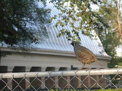 downtown salt lake city has some unique bird habitat here 39 s a