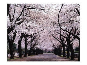 Not really Mokpo, but I'm sure this looks like somewhere in Korea!