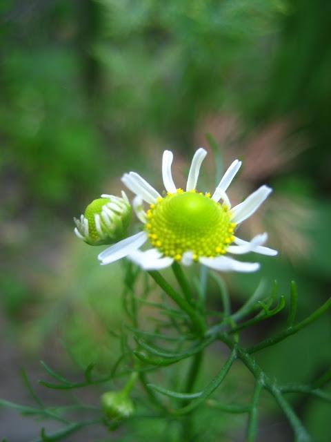 de 30 mooiste foto's van mijn tuin van juli 2010
